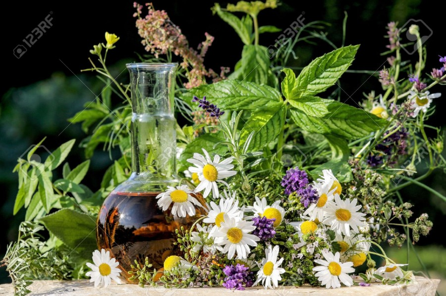 Book Review: Magic and Medicine of Plants by Reader's Digest