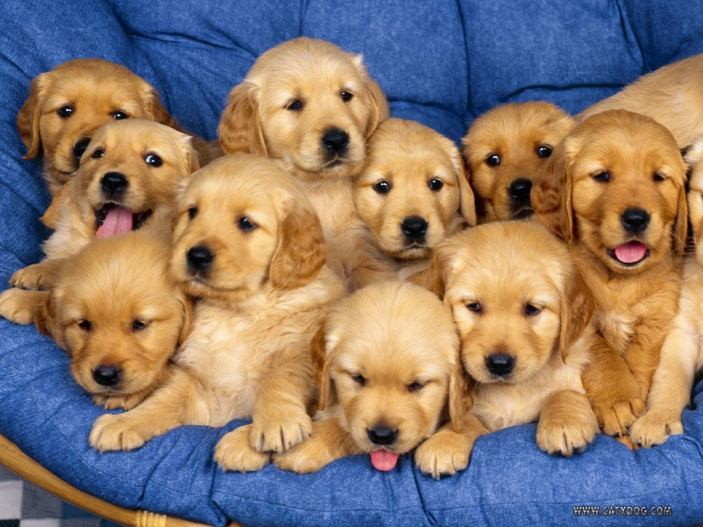 Smile Because Here are 11 Books All About Puppies!