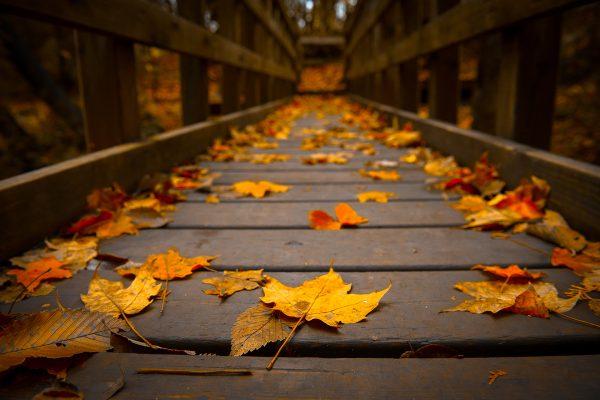 autumn-bridge