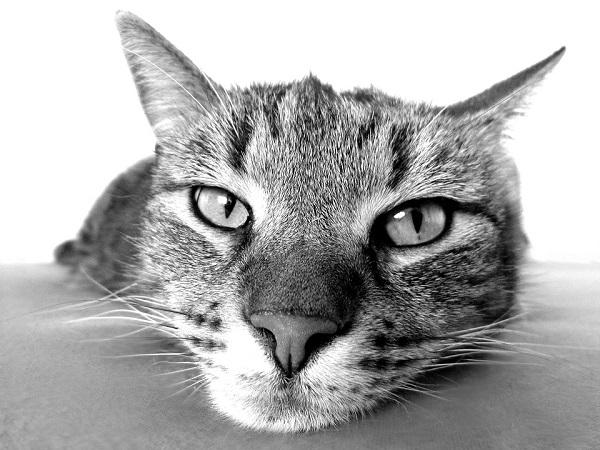 cat-98359_960_720
