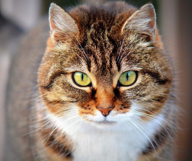 5 Books Starring Fantastic Feline Characters