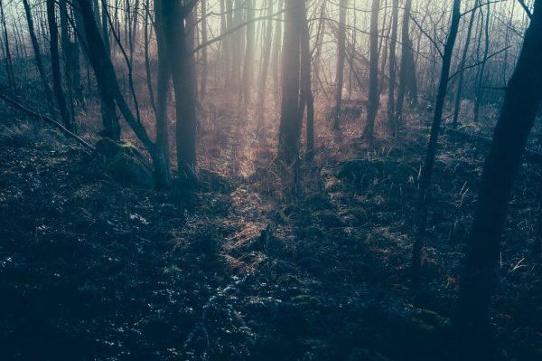 dark-forest-1081991_960_720