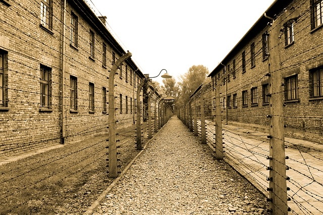 Scholar Recommended: 7 Contemporary Books About The Holocaust