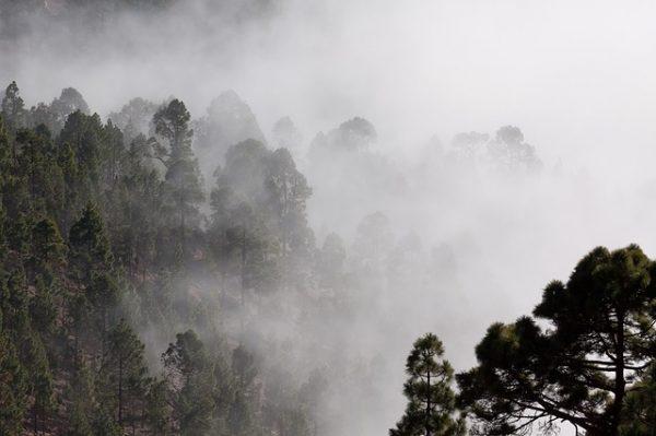 fog-571786_640