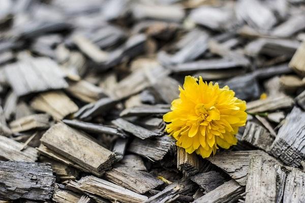 yellow-370256_960_720